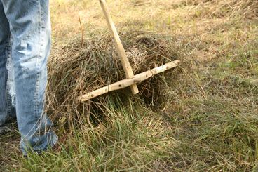 Feeding rabbits can get expensive, so start growing hay at home. It's a cheap way to make tons of feed, and make raising rabbits a little easier.