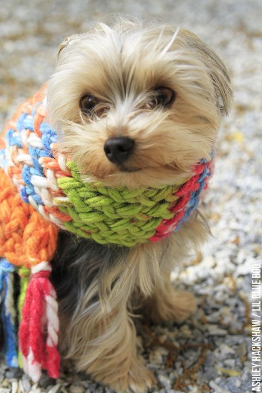 Maltese Dog Knitting Pattern : Create an easy DIY scarf using a loom from MichaelsMakers Lil Blue Boo Yarn...