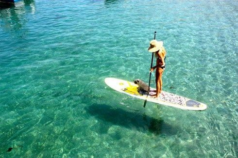 Paddle boarding: Cant Wait, Favorite Places, Surfing Boards, Paddles Surfing, Paddleboardshop Paddleboarding, Bays Paddlesport, Paddleboarding Paddleboarding, Boards Paddleboardshop, Paddles Boards