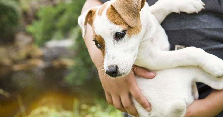 ¿Cómo deshacerme de los parásitos de mi perro sin medicación?. Usar alimentos naturales y elementos a base de hierbas del hogar son tan efectivos para tratar los parásitos del perro como lo son las medicaciones recetadas por tu veterinario. Diferentes remedios podrán ayudar a tu perro en áreas específicas para ayudar al proceso de curación. Existe una gran variedad de opciones para eliminar los parásitos de ...