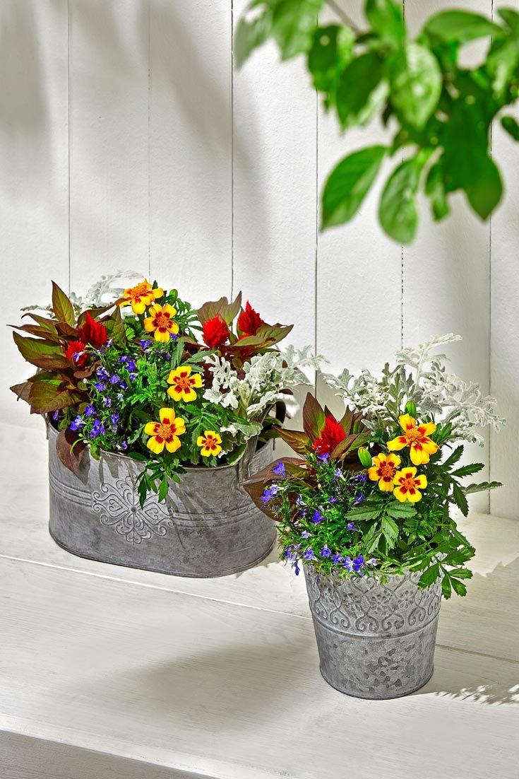 Sommerblumen Sommerblumen Blumen Dekoration