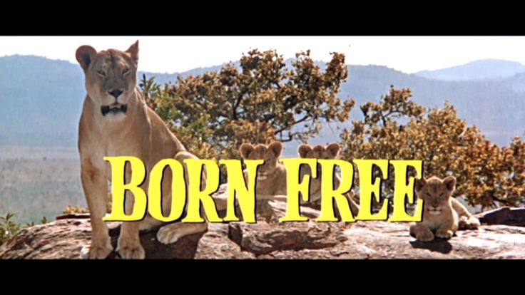 Born Free is a 1966 British drama film starring Virginia McKenna and Bill Travers as Joy and George Adamson, a real-life couple who raised Elsa the Lioness, ...