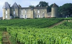 The beautiful wine vineyards in france