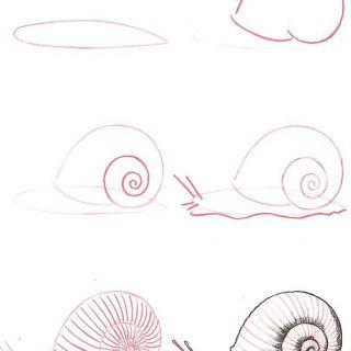 Hayvan Resimleri Nasıl Çizilir? 29