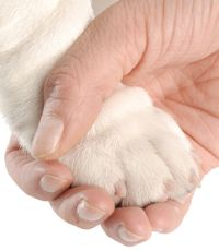 How to Trim Dog Nails  Trimming your dog's nails is an important part of your dog's regular care. Learn how to trim your dog's nails with help from our grooming expert.