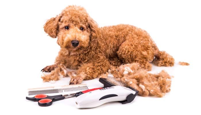 Depending on how you approach it, grooming your dog can be a very enjoyable and worthwhile task. However, if your dog is scared of the noise traditional dog hair clippers make, you'll need to find the best silent dog clippers or at least manual dog clipper to be able to groom your Fido in peace and without stressing him even more than you already have. #dogs #grooming #clipper #hair #silent #dogclippers #pets #cutting