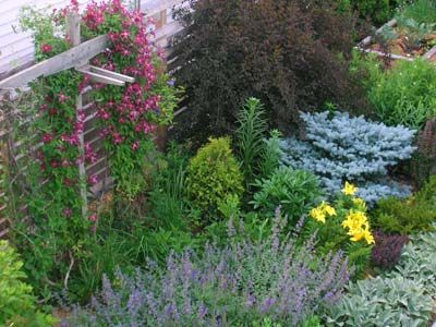 Low-maintenance landscaping ideas