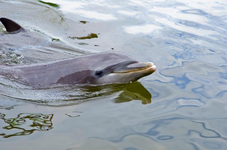 #добрый #кубинский #дельфин #cuba #куба #500px #vsco #photoshop #instagramnikonrussia #natgeo #nikon #d610 #sigmaphoto #sandisk