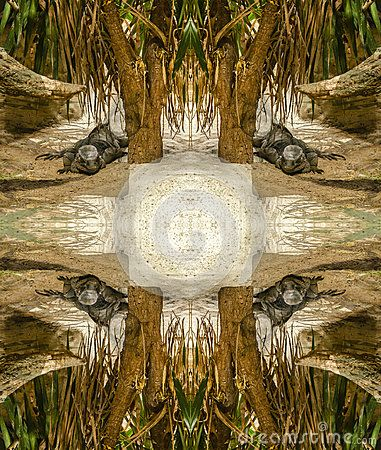 Abstract photo with iguana in an exotic environment