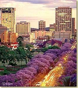 Pretoria / Tswane,  SA: Jacaranda city where the streets are lined with more than 15000 fully grown jacaranda trees that turn the streets of the older parts of the city purple in October.