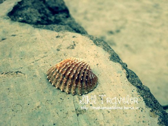 Clam Shell on The Road Photostock. Downloadable. by SikilTraveler