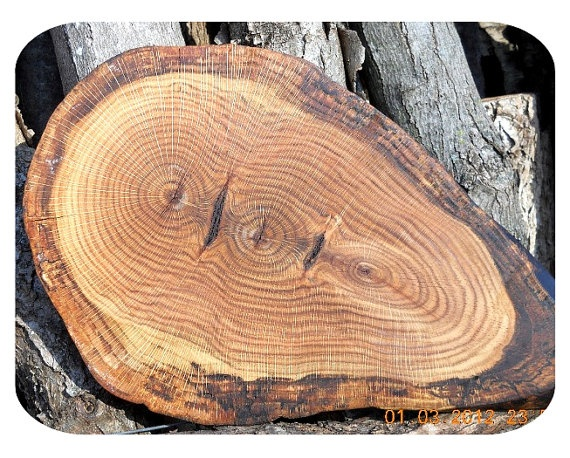 The 25 best tree trunk slices ideas on pinterest wood for Large tree trunk slices