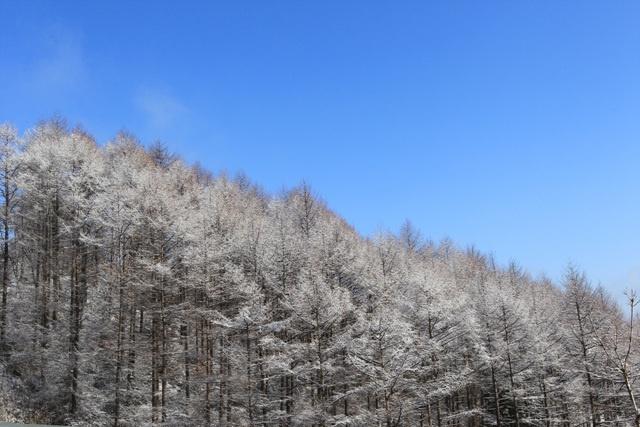 12/13 Winter Season's Photo sketch in the High 1 Ski Resort in Jungsun, South Korea