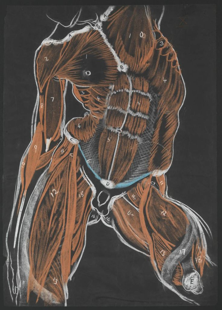 Top 10 Human Anatomy Books For Artists - Concept Art Empire