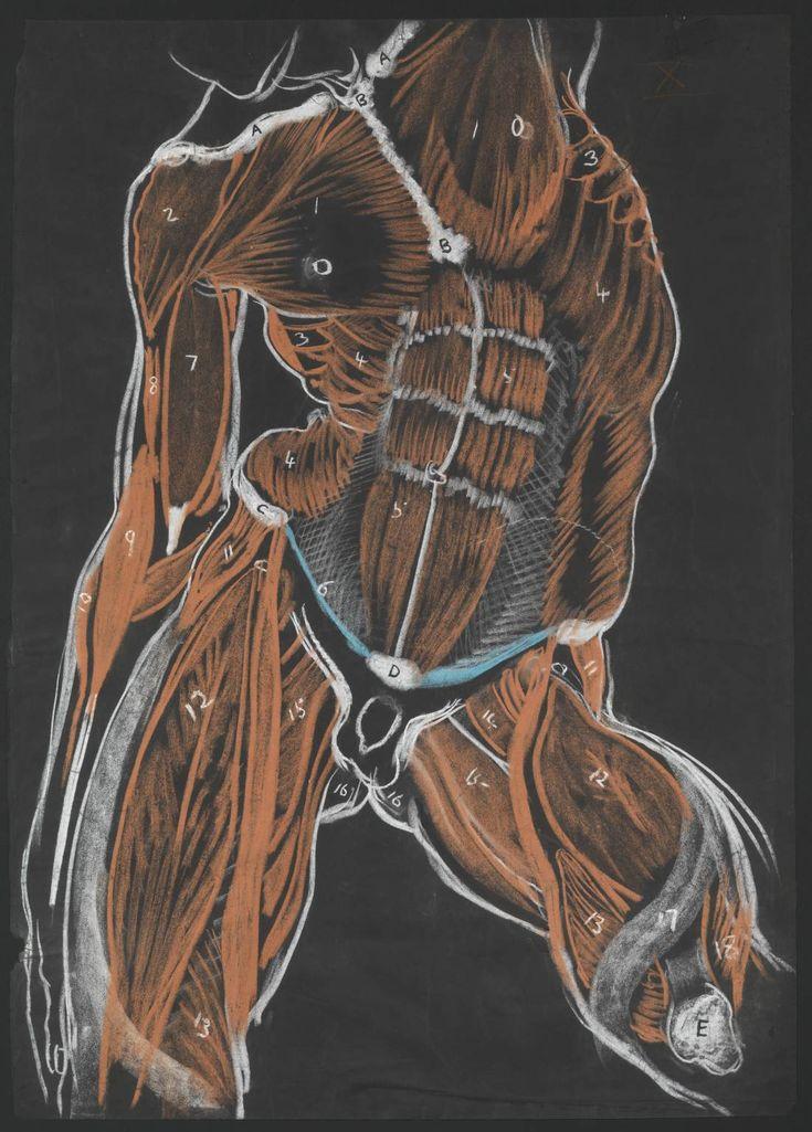 Anatomy & Physiology | Homework Help | CliffsNotes