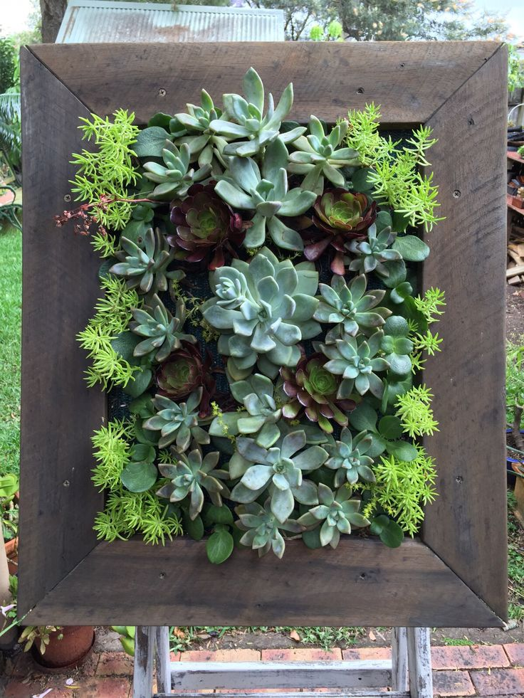 Living Wall Check For The Love Of Succulents Fb Page Https://www.