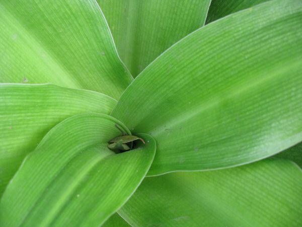 Naturaleza vista de frente color verde primer plano hoja - Color verde hoja ...