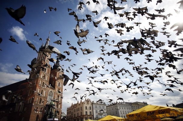 Many people can probably recognize the famous market square, Rynek Glowny, in Krakow, Poland. I took this photo just as the pigeons took off in a tizzy right above my head. I particularly enjoy the three elements that all work together - St. Mary's Basilica that isn't overshadowed by the flurry of pigeons, and the splash of yellow of the patio umbrellas in the right corner that frame the shot. In contrast to the other photos, the weather in Krakow was about 15 degrees and sunny.
