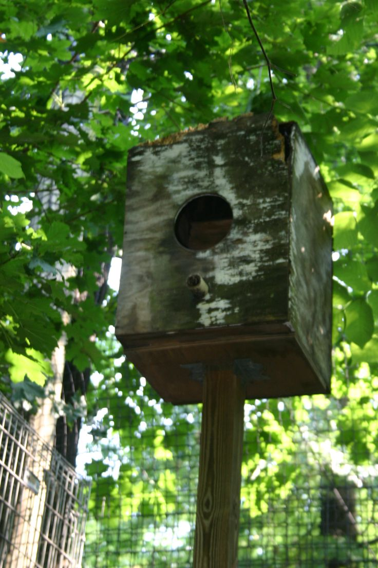 15 best Owl houses images on Pinterest | Owl house ...