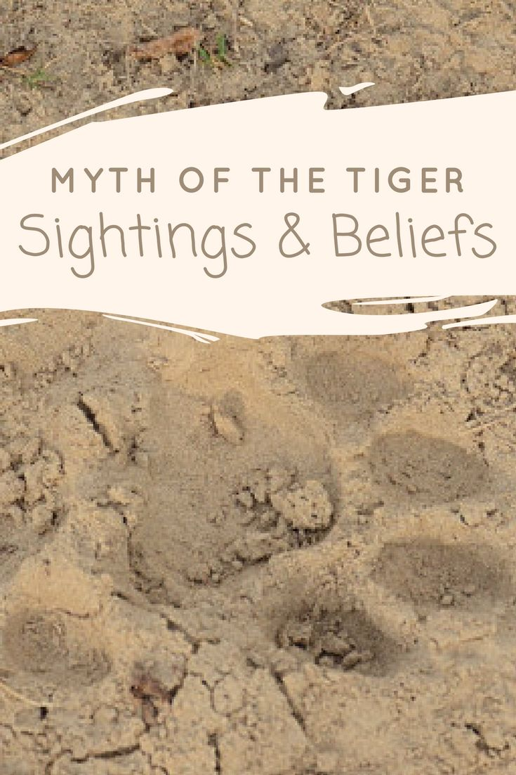 Myth of the Tiger - Sightings and Beliefs