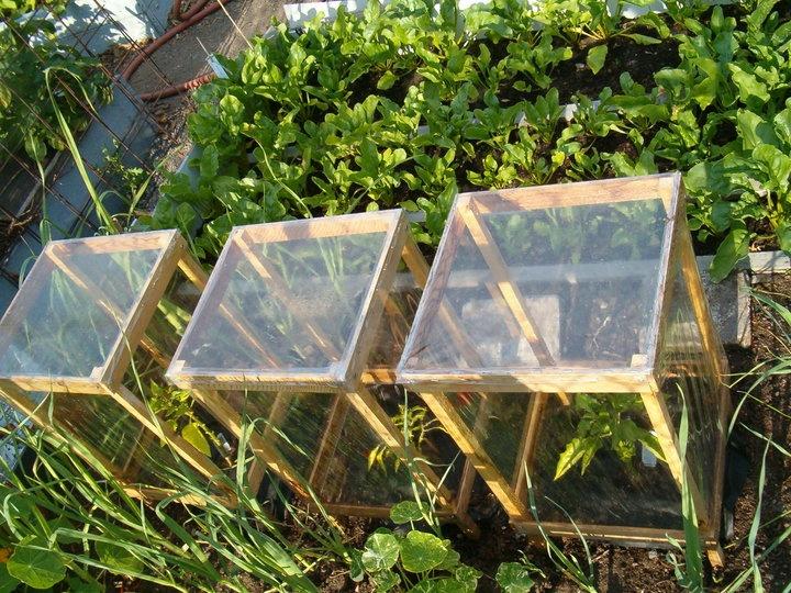 best 25 mini greenhouse ideas on pinterest diy mini. Black Bedroom Furniture Sets. Home Design Ideas