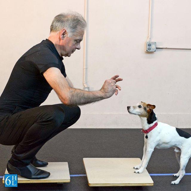 Trainer And Choreographer Sabatino And Spike Agility Dog