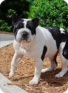 Canton, GA - English Bulldog/Shar Pei Mix. Meet Elsa, a dog for adoption. http://www.adoptapet.com/pet/18019871-canton-georgia-english-bulldog-mix