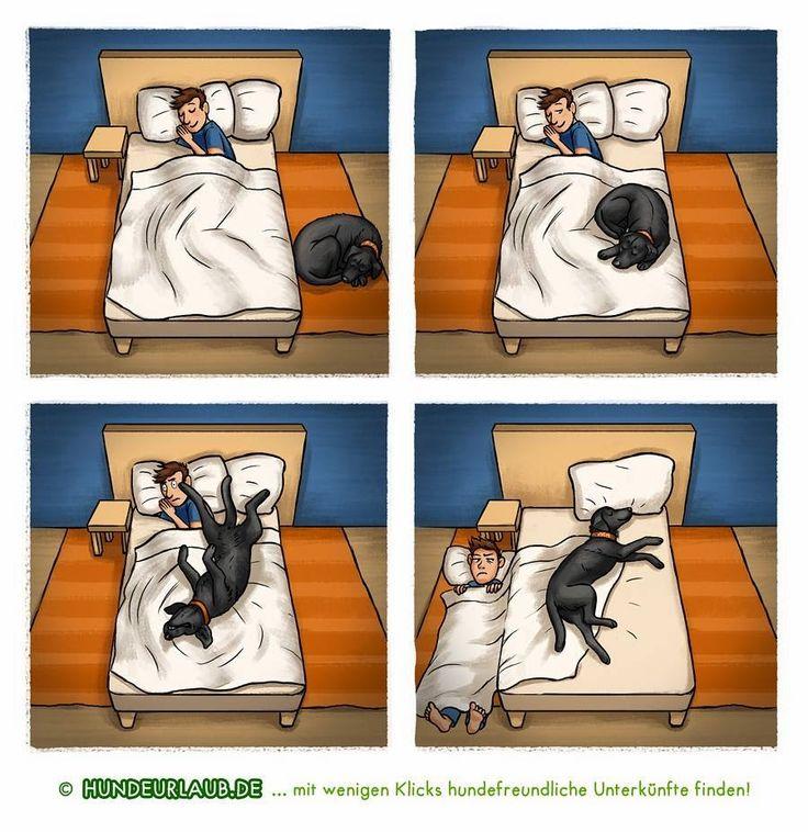 Darf der Hund mit ins Bett? Jetzt an der Umfrage teilnehmen von www.hundeurlaub.de: https://www.hundeurlaub.de/blog/2016/11/11/darf-der-hund-mit-ins-bett/