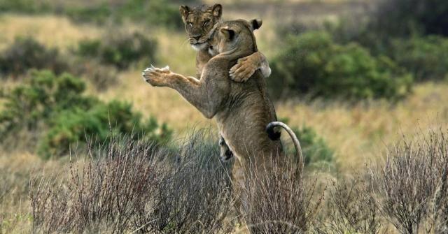 Dans si veselie: Animale haioase, in ipostaze unice