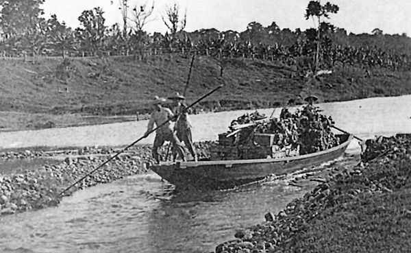 Chinese market gardeners taking their produce to Cairns on sanpans down the Barron River, 1890. Stratford Heritage Trail.