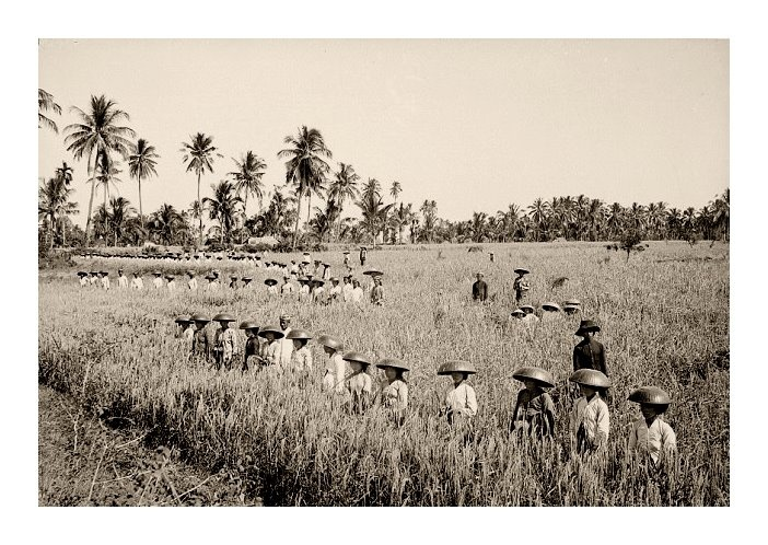 Rice paddies workers, 1920s, photographer unknown