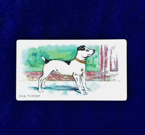 Rare Smooth Fox terrier dog antique trading card from Philadelphia Caramel Company. This card would have been inside a package of candy during c.1910.