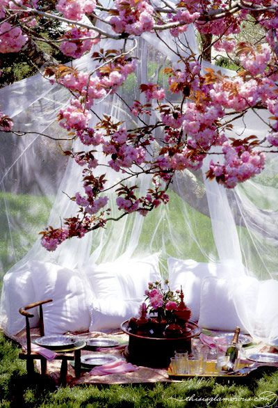 Picnics: Ideas, Dream, Wedding, Romantic Picnics, Outdoor, Place, Garden, Spring, Cherry Blossoms