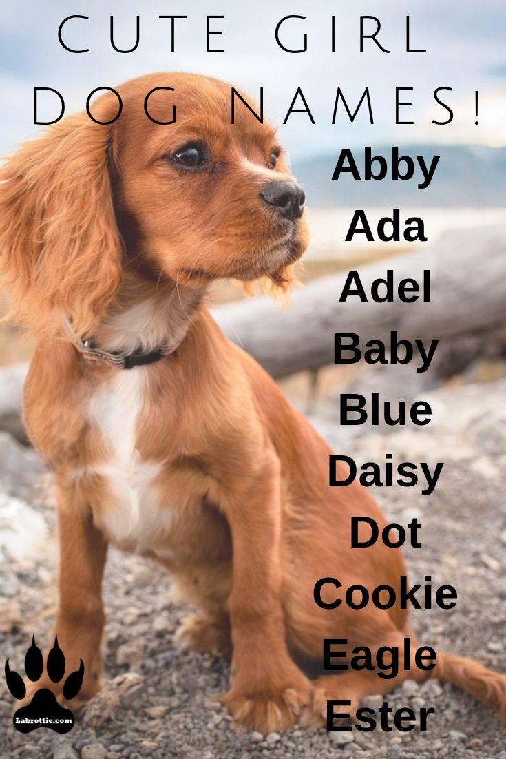 300 Girl Dog Names A Z Girl Dog Names Dog Names Girl Dog