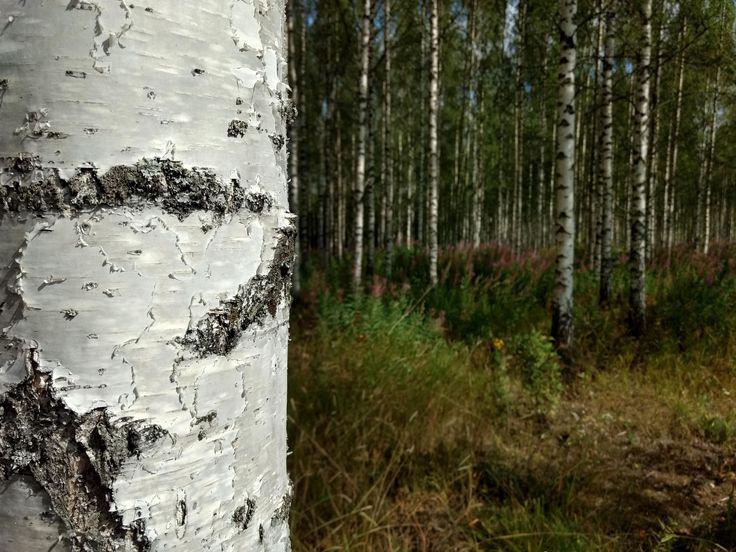 Forenst near Ruovesi Finland [OC] [4608 x 3456] #M…