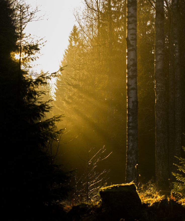 Sunlight rays in Porkkalanniemi recreational area