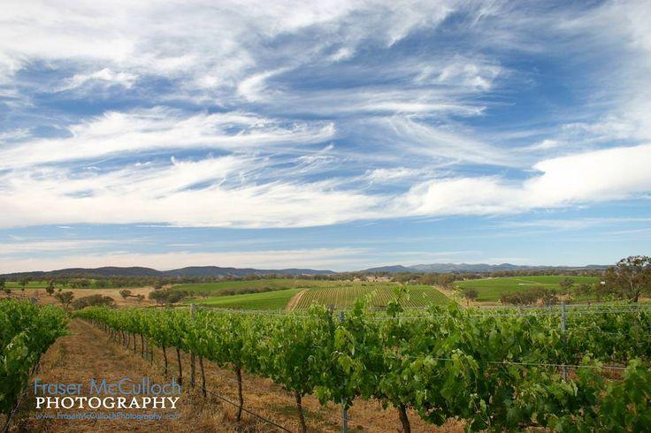 Vineyard Landscape   Another image from Angullong near Orange, NSW.    #vineyard #vines #wine #redwine #whitewine #rows #green #blue #wispy #clouds #orange #nsw #australia