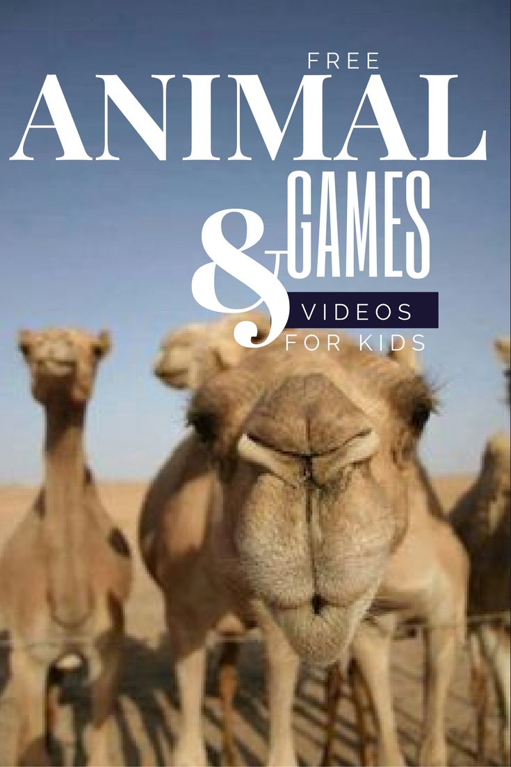 One of the best places to find free SAFE learning games and videos for your kids. These on animals are awesome!