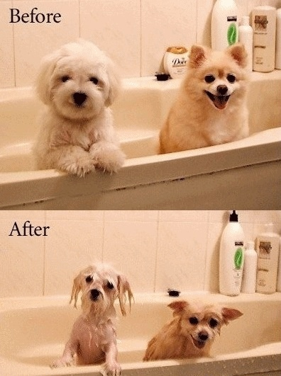 : Make Me Laughing, Funny Dogs, Pet, So True, Wet Dogs, Hair Style, So Funny, Cute Dogs, Bath Time