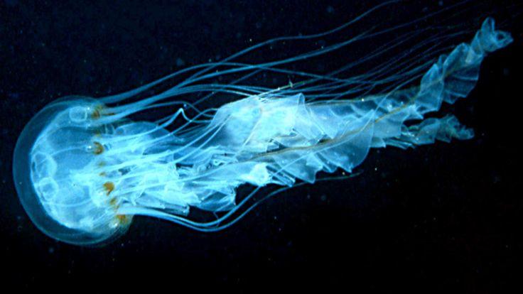 Bioluminescence in deep sea creatures essay