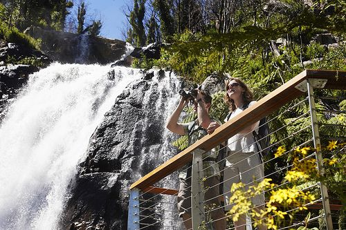 Walking at Steavenson Falls, Marysville, Victoria. A great weekend getaway. More ideas at www.marysvilletourism.com/visit-marysville-apps