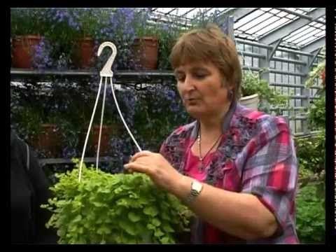 Сад и огород. Ампельные (подвесные) растения. - YouTube