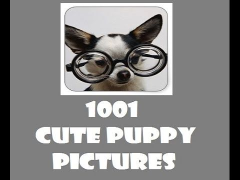 Simply the cutest dog and puppy pictures ever:) sooo cute:) Enjoy the video and get the app:) https://www.youtube.com/watch?v=owFmftr5YSE