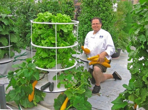 Use hydroponic gardening or aquaponics, the mutual cultivation of vegetables and fish in a closed-loop system. The fish waste feeds the plants, the plants filter the water and you ultimately harvest...