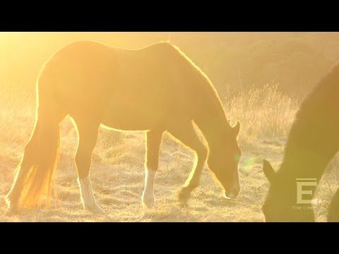 THE CREECH ~ Horses at Sunrise - YouTube