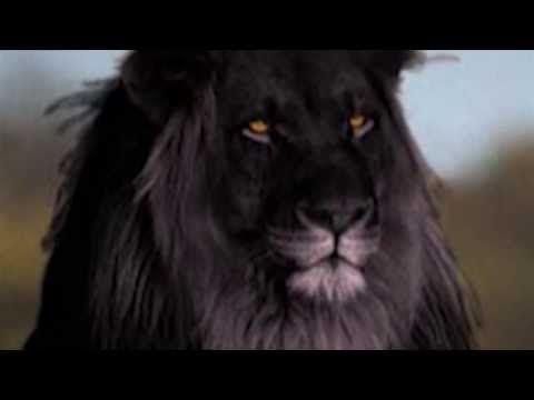 Черный Лев - YouTube
