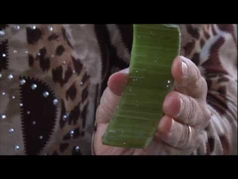 Παρασκευή Φρέσκου Φυσικού Χυμού Αλόης - YouTube