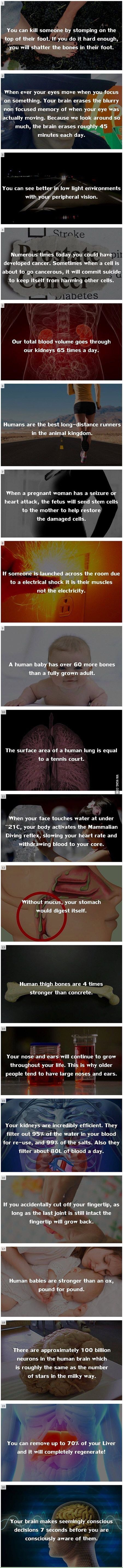Random Fact #5 -> idk if these are true, but they're cool, at least