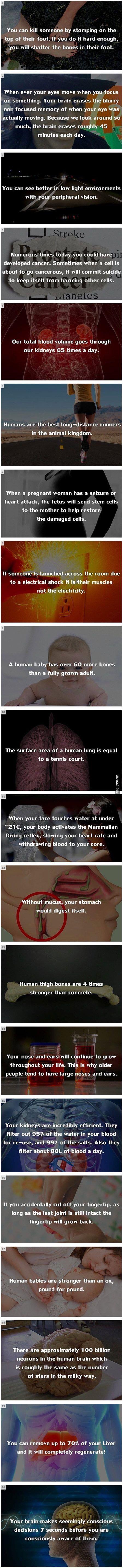 Random Fact #5