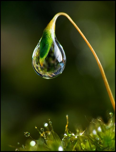 This would look even cooler with a real pretty flower reflected in the drop